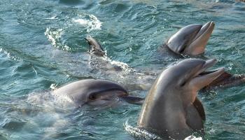 Утришский дельфинарий. Как тренируют дельфинов.